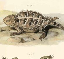 Joseph Fitzinger 1867 0043 Picture Atlas for popular scientific natural history of vertebrates Sticker
