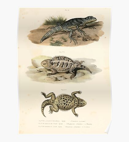 Joseph Fitzinger 1867 0043 Picture Atlas for popular scientific natural history of vertebrates Poster