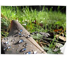 Dew on the fallen leaves Poster