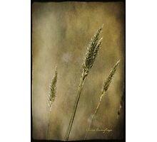 Wild Grasses Photographic Print