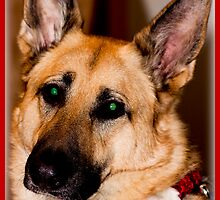 In Loving Memory Of My German Shepherd - Bear by Melissa Seaback