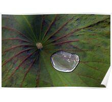 Crystal liquid-Water Lily, Bali Poster