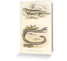 Joseph Fitzinger 1867 0087 Picture Atlas for popular scientific natural history of vertebrates Greeting Card
