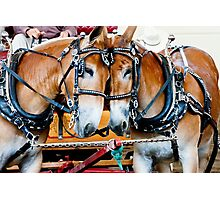 Two Mules Photographic Print