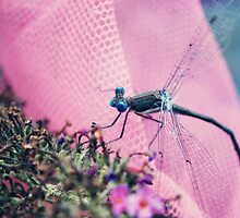 Dragonfly 1 by Michael Garrison