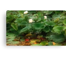 Summer in the Wetlands Canvas Print