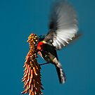 Sweet Nectar by JustineEB