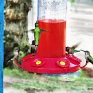 Hummingbird Haven by Rhonda Strickland