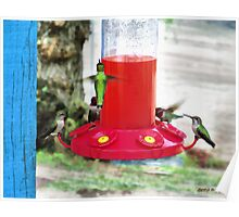 Hummingbird Haven Poster