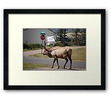 huge elk  Framed Print
