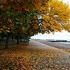 Autumn along the Boardwalk by Melinda Watson