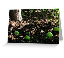 Apples Down Greeting Card