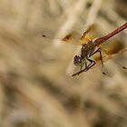 81515 dragon by pcfyi