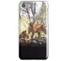 Lion Cubs iPhone Case/Skin