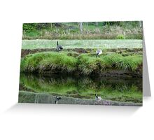 Geese grazing Greeting Card