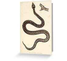 Joseph Fitzinger 1867 0153 Picture Atlas for popular scientific natural history of vertebrates Greeting Card