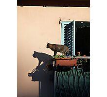 Cat on the balcony Photographic Print