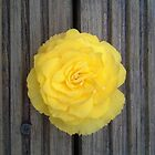 Yellow Flower on the Deck by SidelineArt
