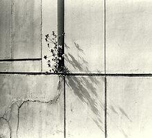 Concrete Garden by Maya Hiort Petersen