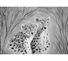 Cheetah cubs  Photographic Print