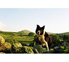 Among the Hills with Indy Photographic Print