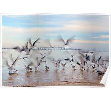 Chasing Birds Poster