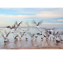 Chasing Birds Photographic Print