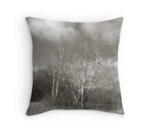 Birch In November Sun Throw Pillow