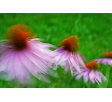 Coneflower Impressions Photographic Print