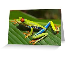Special Red-eyed Tree Frog Greeting Card
