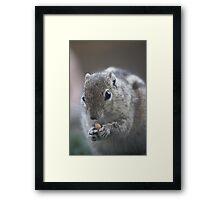 Finders Are Keepers Framed Print