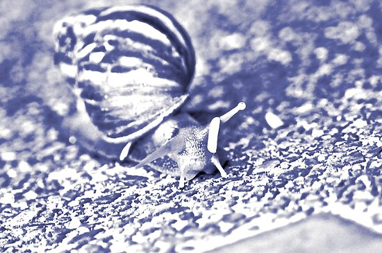 Blue snail.. by Kornrawiee