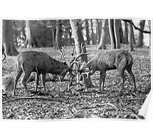 Red Deer at Wollaton Park Poster