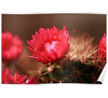 Flowers and spines Poster
