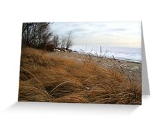 Beach grass in winter Greeting Card