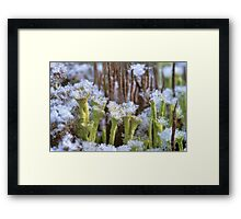 Winter lichens Framed Print
