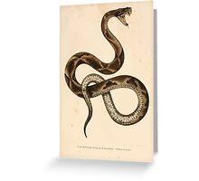 Joseph Fitzinger 1867 0157 Picture Atlas for popular scientific natural history of vertebrates Greeting Card