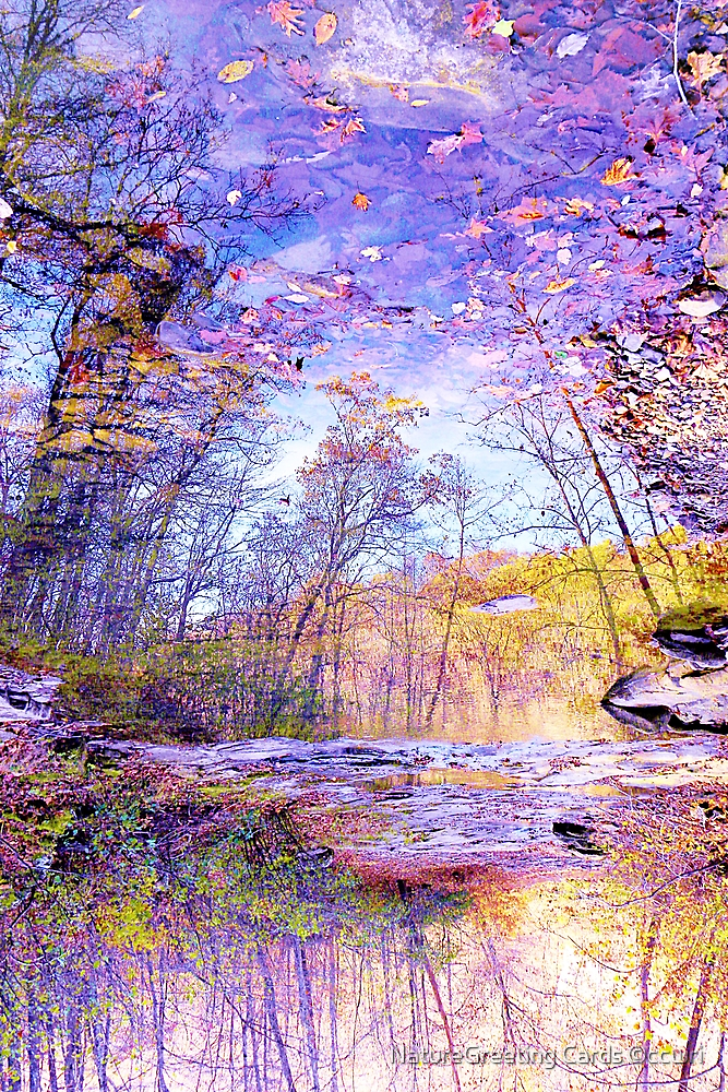 Enchanted Forest by NatureGreeting Cards ©ccwri