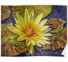 Water Lilies 2 - Yellow Poster