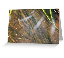 Shooting tadpoles with a 400mm lens Greeting Card