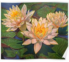 Water Lilies 6 Poster