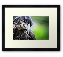 Curious Young Magpie... Framed Print