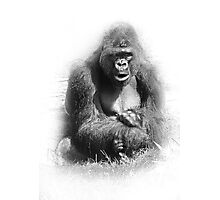 Mr. Gorilla Photographic Print