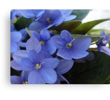Happy Violets Canvas Print