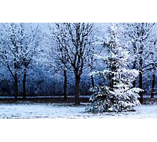 Blue Forest Christmas Tree Photographic Print