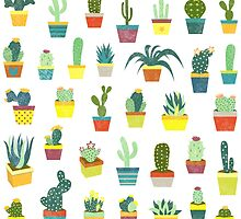 Succulents by GiveMore