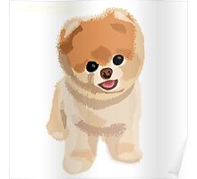 Boo the cutest dog Poster