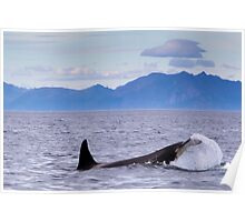 Furry Orca Poster