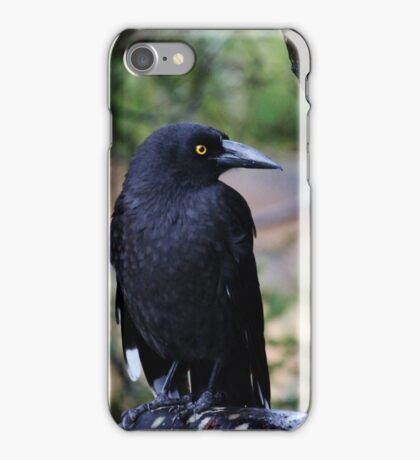 Black Currawong iPhone Case/Skin