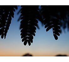 Tropic Silhouette Photographic Print